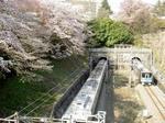 little_tamagawa_spring1.JPG