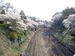 little_tamagawa_spring2.JPG