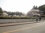 little_tamagawa_spring3.JPG